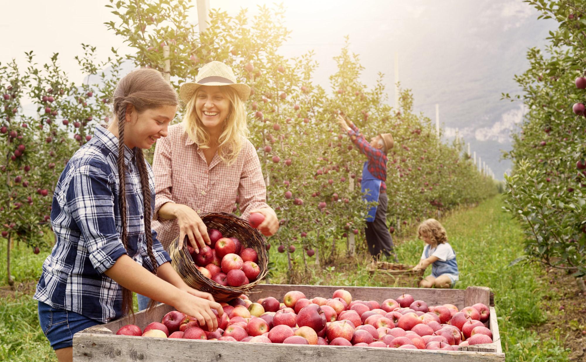 Leni's al via le spremute con le mele della nuova raccolta